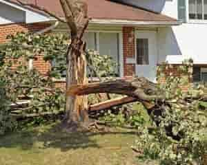 Tree split from the storm in front of a house in Madison, WI